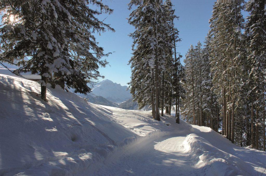winterwald_am_nachmittag_hotel_walserberg