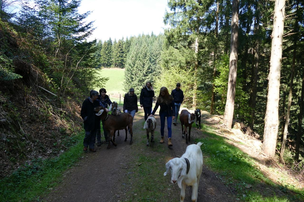 Mit Der Ziege To Go Durch Das Zweit 228 Lerland Im Schwarzwald